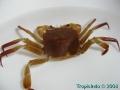 phoca_thumb_l_crab_2