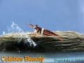 phoca_thumb_l_celebes beauty_3
