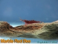 phoca_thumb_l_marble red bee_1