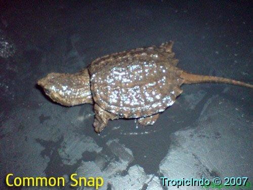 phoca_thumb_l_common snap001