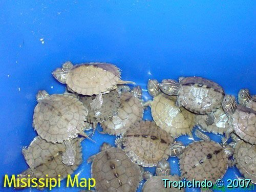 phoca_thumb_l_misissipi map001