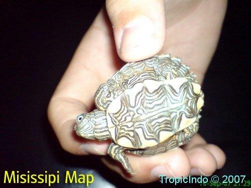 phoca_thumb_l_misissipi map003