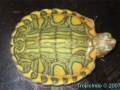 phoca_thumb_l_pastel red-eared slider