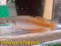 phoca_thumb_l_rainbow parkinsons